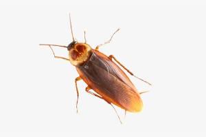 pest control from menehune pest management hi
